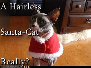 A Hairless Santa-Cat Really?