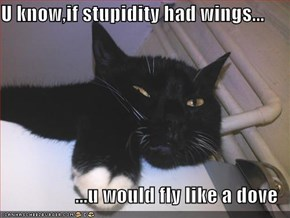 U know,if stupidity had wings...  ...u would fly like a dove