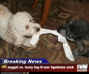 Breaking News - nugget vs. lacey tug-O-war 4gudness sock