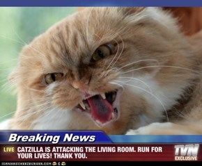 Breaking News - CATZILLA IS ATTACKING THE LIVING ROOM. RUN FOR YOUR LIVES! THANK YOU.