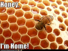 Honey,  I'm Home!