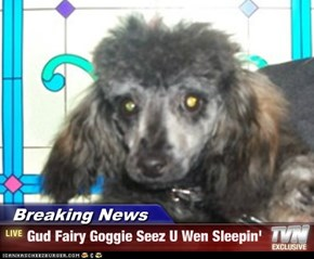 Breaking News - Gud Fairy Goggie Seez U Wen Sleepin'