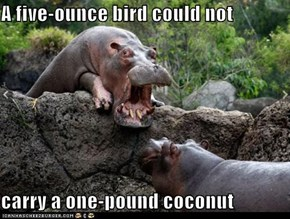 A five-ounce bird could not  carry a one-pound coconut