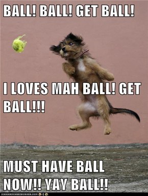 BALL! BALL! GET BALL! I LOVES MAH BALL! GET BALL!!! MUST HAVE BALL NOW!! YAY BALL!!