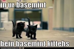 in ur basemint  bein basemint kittehs