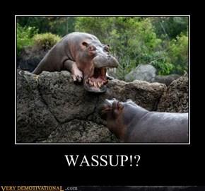 WASSUP!?