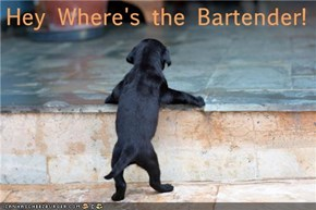 Hey Where's the Bartender!