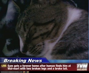 Breaking News - Sam gets a forever home after human finds him at Wal-mart with two broken legs and a broke tail.