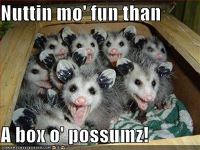 Nuttin mo' fun than  A box o' possumz!