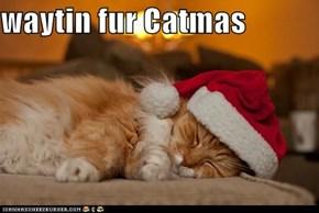 waytin fur Catmas