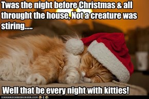 Well that be every night with kitties!