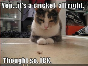 Yep...it's a cricket, all right.    Thought so. ICK.