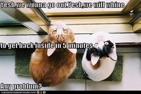 Yesh,we wunna go out.Yesh,we will whine to get back inside in 5 minutes, Any problum?