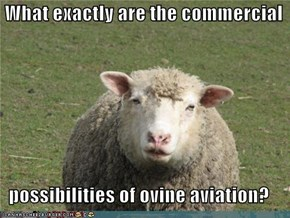 What exactly are the commercial     possibilities of ovine aviation?