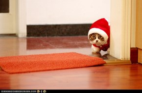 Advent Kitteh of teh Day: Christmas Is Just Around the Corner!