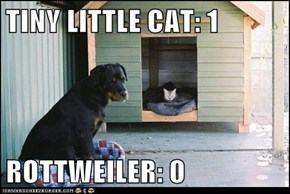 TINY LITTLE CAT: 1  ROTTWEILER: 0