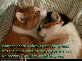 Courage doesn't always roar, sometimes it's the quiet voice at the end of the day whispering 'I will try again tomorrow'  ~Mary Anne Radmacher