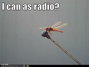 I can as radio?