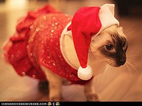 14 Pets in Santa Hats