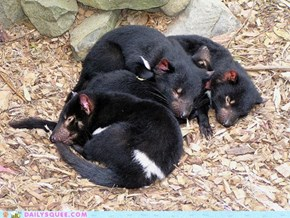 Squee Spree: Sleepy Little Devils