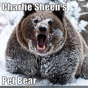 Charlie Sheen's  Pet Bear