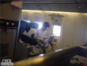 Panda Express WIN