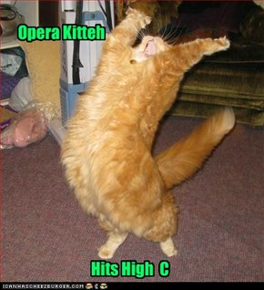 It ain't over til the orange kitty sings
