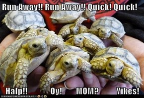 Run Away!! Run Away!! Quick! Quick!    Halp!!             Oy!        MOM?          Yikes!