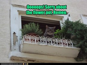 Ooooops! Sorry about the flower pot, Romeo.