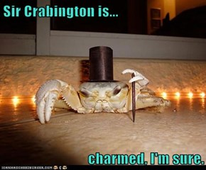 Sir Crabington is...  charmed, I'm sure.