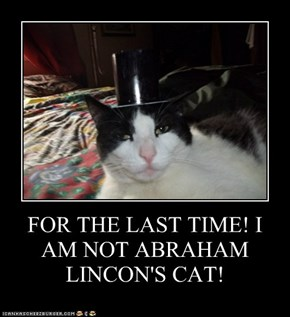 FOR THE LAST TIME! I AM NOT ABRAHAM LINCON'S CAT!