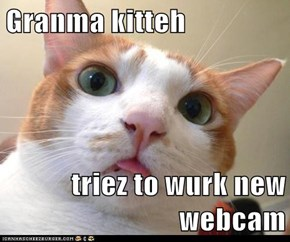 Granma kitteh  triez to wurk new webcam