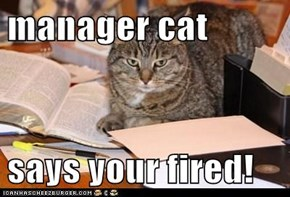 manager cat  says your fired!
