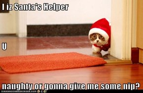 I iz Santa's Helper U naughty or gonna give me some nip?