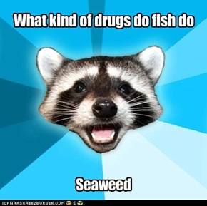 What kind of drugs do fish do