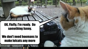 OK, Fluffy, I'm ready.  Do something funny.We don't need hoomans to make lolcats any more