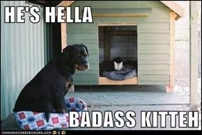 HE'S HELLA  BADASS KITTEH