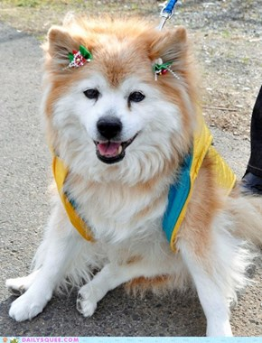 R.I.P. Pusuke, the World's Oldest Dog