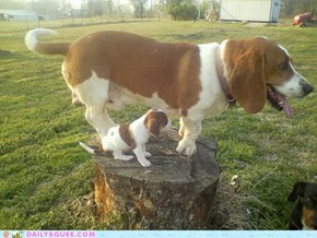 I shall call him.... Mini Me!