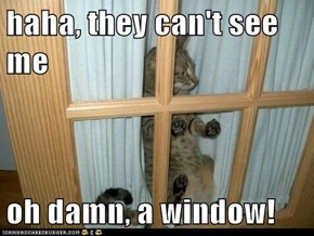 haha, they can't see me  oh damn, a window!