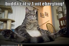 budda cat iz 1 wit eberyting!