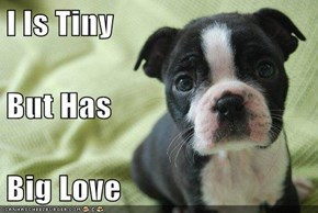 I Is Tiny But Has  Big Love