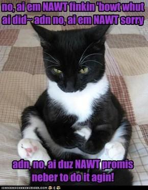 Stubburn Cat kan wate foreber!