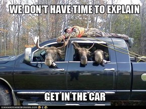 No time for moose explanation