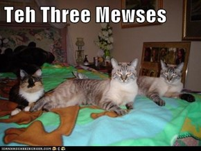 Teh Three Mewses