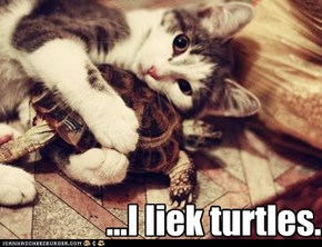 ...I liek turtles.
