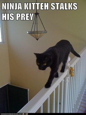 NINJA KITTEH STALKS HIS PREY