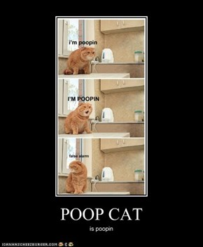 POOP CAT