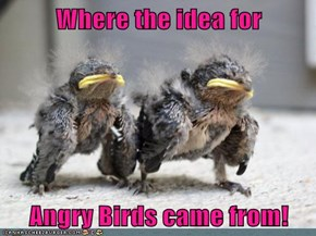 Where the idea for  Angry Birds came from!