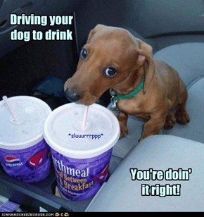 You drive, Me drink